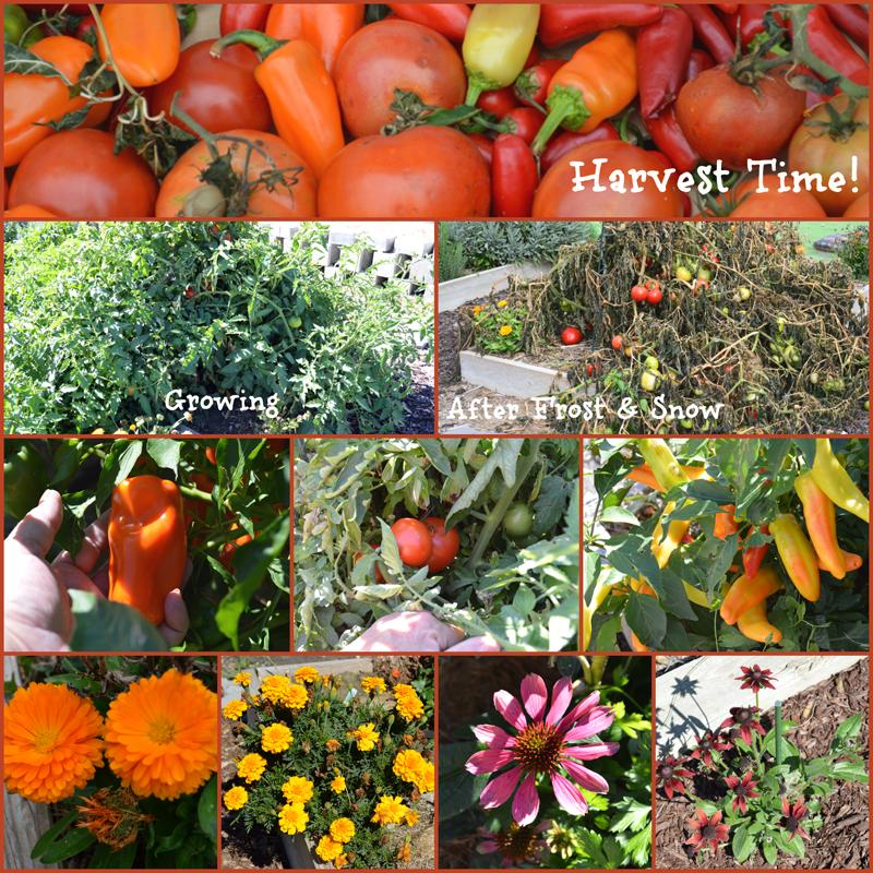 grannie geek, harvest time collage