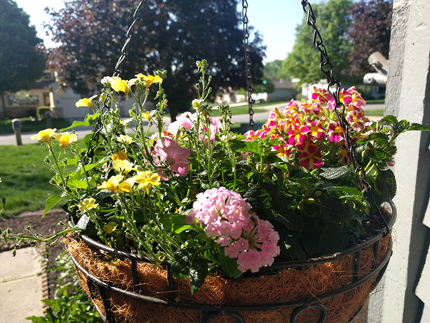 at mimi's table 2018 spring landscaping front hanging basket