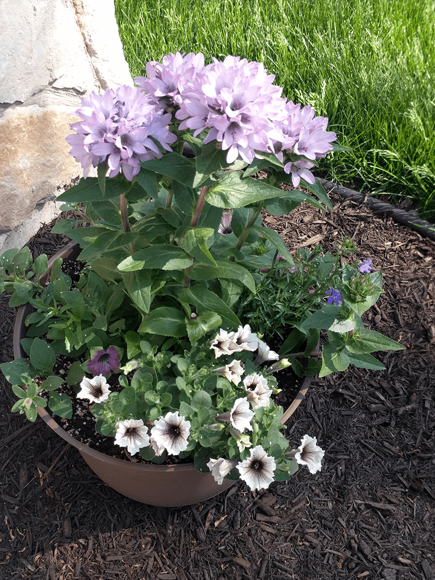 at mimi's table 2018 landscaping front planter 1