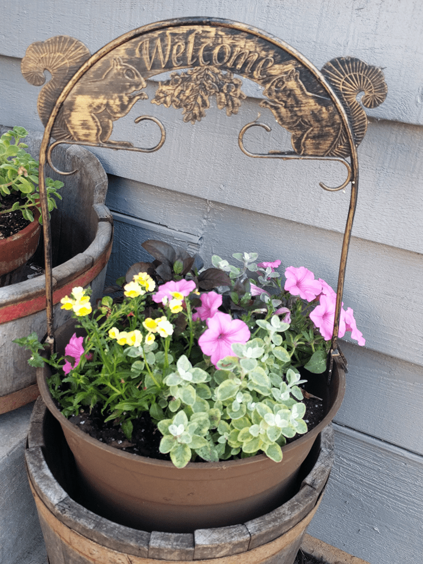at mimi's table 2018 landscaping front of house planter welcome